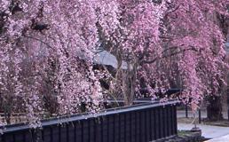 角館 みちのく小京都